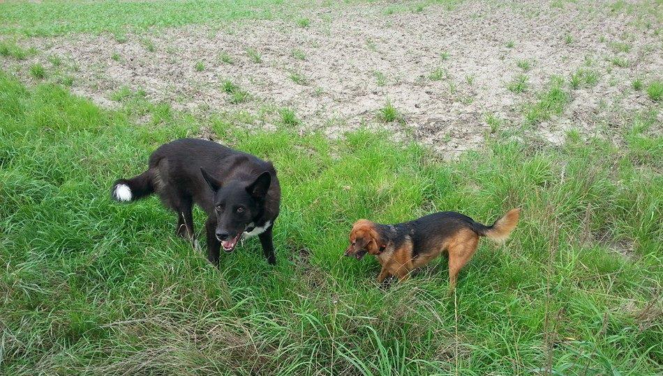 spielen-mit-hunden-03